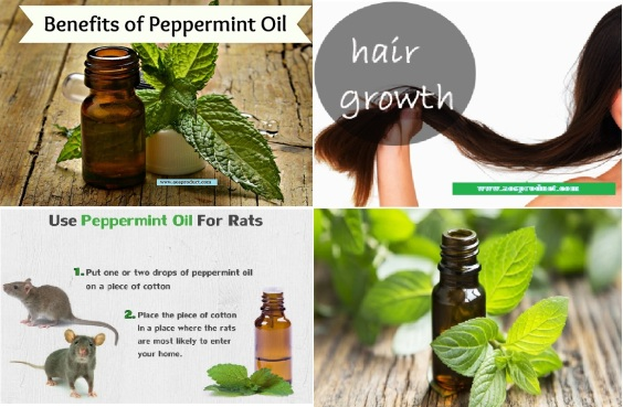 benefits-of-peppermint-oil-2
